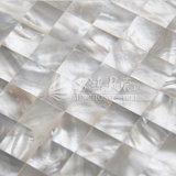 De witte Zwabber Shell van de Lip 15*15mm Vierkante Tegel van het Mozaïek