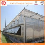 Landbouw Multi Span PC Sheet Greenhouse voor Groenten / Bloemen