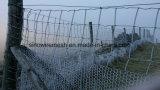 Fil de poulet hexagonal de Sailin pour la clôture de ferme