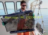 Malla de ostra flotante, bolsa de malla de plástico, vaso de ostra