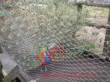 Las jaulas pequeñas para Cat Bird