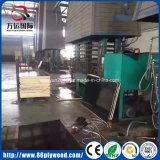 Las ventas de la fábrica filman directo la madera contrachapada comercial hecha frente de la madera contrachapada para la construcción