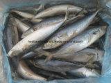 Goedgekeurde Vissen in Zambia Bevroren Vreedzame Makreel