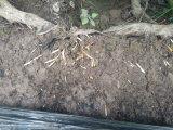 Aflojar la calidad del suelo con la mejora de suelo de Unigrow