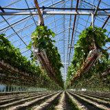 Sistema del hidrocultivo del invernadero para la fruta de las flores de los vehículos