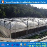 Casa verde da grande película comercial do Hydroponics do tamanho para o tomate