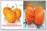 Машина шелушения кожи Gourd воска утверждения Ce большой емкости Fxp-99