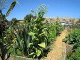 Pflanzenwachstum-Regler
