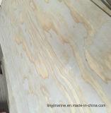높은 Guality는 소나무 합판을 발광한다