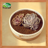 Paese Style Ceramic Succulent Pot con Baboo Stand