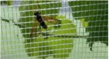 Anti prodotto della rete dell'ape di agricoltura