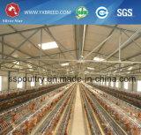 Il pollame dei nuovi prodotti mette a strati il piano aziendale dell'azienda avicola del contenitore