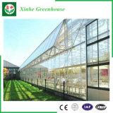 Serra di vetro per la piantatura di verdure