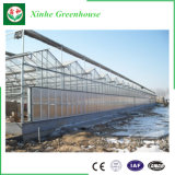 Glasgewächshaus für das Pflanzen von Vegatable