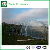 Serra di plastica a un solo strato commerciale di agricoltura