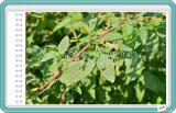 Glufosinate caldo del diserbante di Agrichemical - ammonio 95% SL