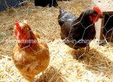 Filetarbeit für Huhn-Draht mit kohlenstoffarmem Stahl