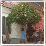 Arbre artificiel de Ficus de Bayan d'usine de décoration de jardin de qualité
