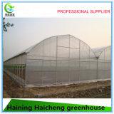 야채를 위한 높은 갱도 농업 녹색 집
