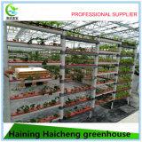 Wasserkulturglasgewächshaus mit äußerem Schattierung-System