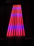 2015 레드 블루 컬러 96PCS 칩 4피트 18W 공장 튜브 라이트 LED 성장