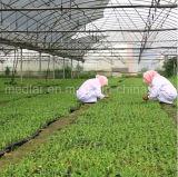 Fabbrica naturale della bacca di Goji dell'estratto dell'erba della nespola