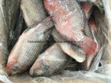全Round 500-800g Frozen Chopa Hot Sale Tilapia