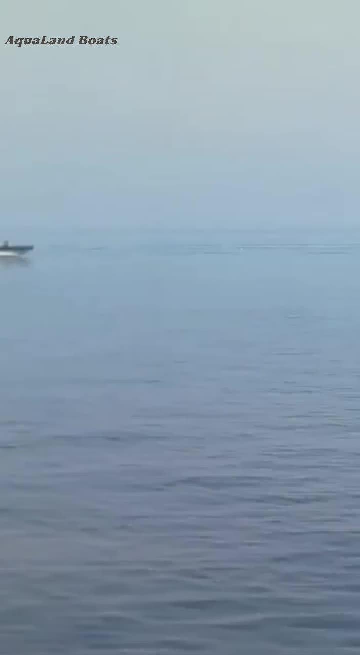 Aqualand 26fefet-38 قدم 8.3M-11.5m 22 شخصا راكب محرك مطاطي صلب طائر طائر طائر طبريا قارب سرعة Rib الطاقم مع الفئة B CE (RIB1150)