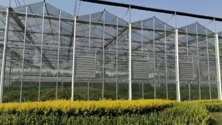 茶業 / 野菜 / 花 / トマト / ペッパー用灌漑水相系を備えた安価な農業 / 農業 / 農業 / ポリカーボネート / ガラス / マルチスパン温室