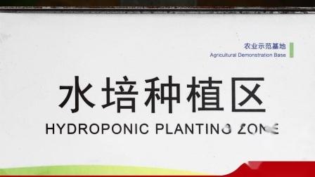 農業プロジェクトマルチスパン PE/ ポーフィルム温室と水耕 - 肥料 / 灌漑 / 冷却システム チェリートマトのためにストロベリー Cucumber Lettucce