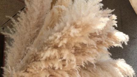 Естественный белый пампасов травы для проведения свадеб оформление