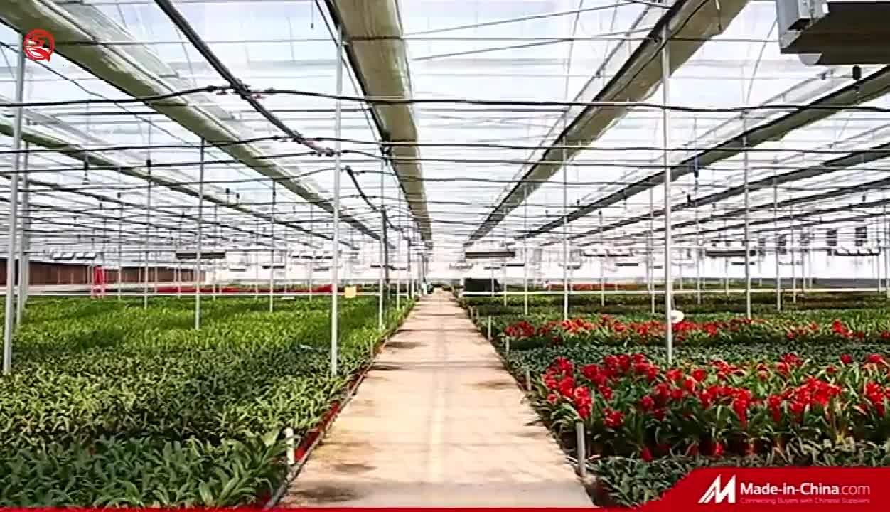 農業 / 農業 / 複数スパン / 単一スパン / トンネルプラスチックフィルム温室とトマト / ストロベリー / キュウリ植樹用灌漑システム