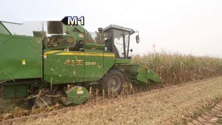 Três linhas da máquina de colheita de milho autopropelido ceifeira-debulhadora (4YZ-3E)