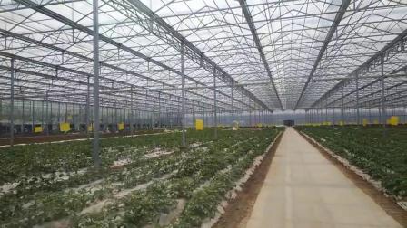 Venlo タイプの単層ポリカーボネートの温室は花のために / 植物 / 植物園 / 農場 / 水産園 / 家畜の繁殖 / 生態系レストラン 水分解を使用します