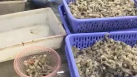 Nice Color Frozen Hoso vannamei Shrimp 競合価格
