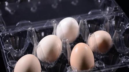 Eierbox, klar, Eierkarton, Eierschale 8pcs Eier Versandfach