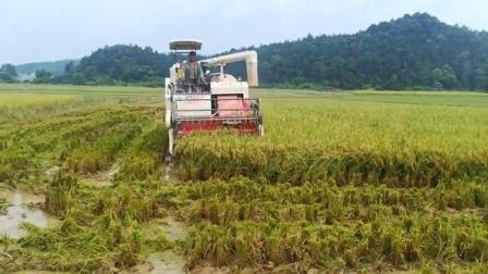 4lz-5 Rice Harvester grano mietitrebbia soia Millet grano Barley piccolo Mini Manuale alimentazione completa Paddy Cina Agricoltura macchine agricole