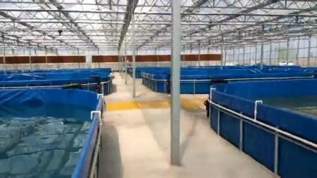 serbatoio di pesci pieghevole dello stagno di pesci della tela incatramata 1000L