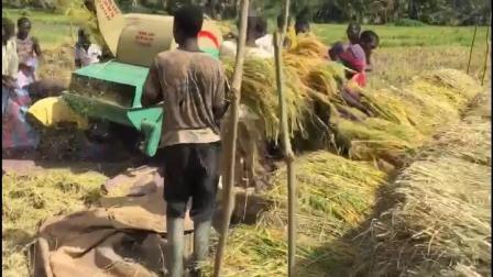 Entraîné par moteur diesel Paddy/blé batteuse
