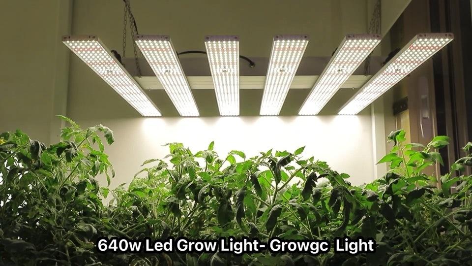 320W CannIBIS 600 W Gitiva PRO Cree Optic qb LED 先端を明るく 50W 延長