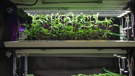 Luce a LED Grow Light da 48 W per agricoltura e orticoltura per interni Striscia per impianti con UL