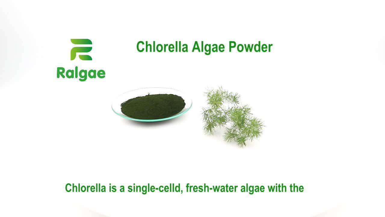Piensos de algas en polvo de alga Chlorella para mascotas y animales