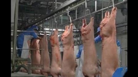 الدجاج الدجاج الدجاج الدجاج معدات الضحك سعر صغير