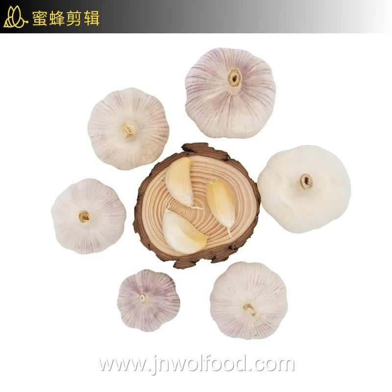 New Crop 4.5cm/5.0cm/5.5cm/6.0cm Normal White Pure Super White Fresh Garlic 中国工場輸出メッシュバッグおよびカートンのサプライヤ卸売価格 箱の梱包