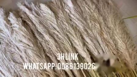 Сушеные декоративные крем пампасов травы