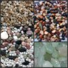 Landscape Natural Stone Pebble for Cobblestone
