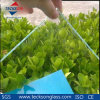 8mm Low- Iron / Extra Clear Float Glass with High Quality