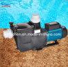 Special Plastic Swimming Pool Pump/SPA Pump