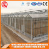 Multi Span Galvanized Steel Frame Glass Green House