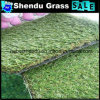 25mm Monofilament Artificial Lawn for Gallary Decoration